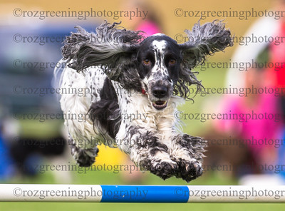 Captain Jack's Saturday Ring 3 Beginners Steeplechase