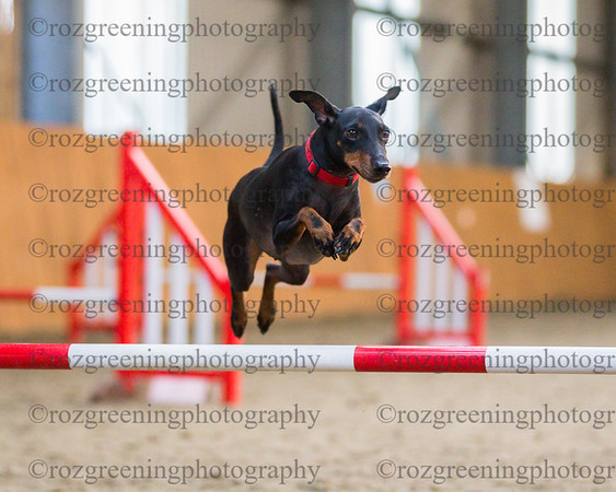 Beginners Jumping Ring 1