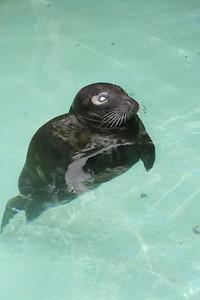 Bermuda,Seal donated by Donald Barwick