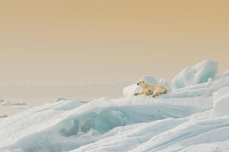 Jääkarhu Patrick ja Operaatio Tassunjälki, photo by Timo Tammisto, Oak Barrel Photography