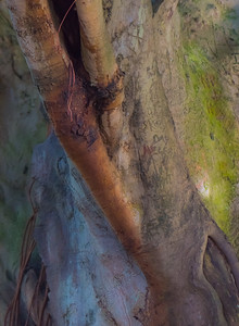Banyan Tree 4