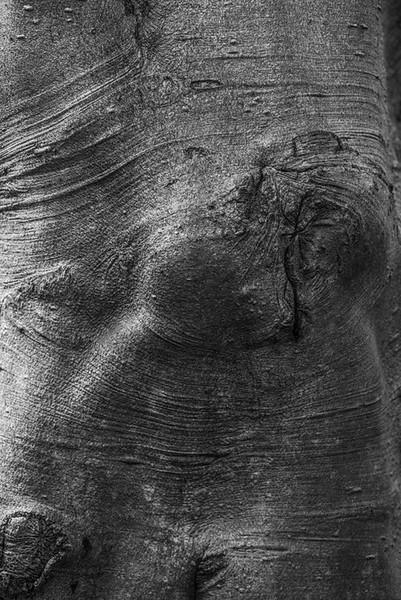 TREE BARK  33