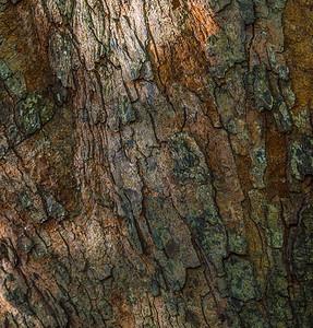 TREE BARK  18
