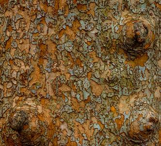 TREE BARK  8