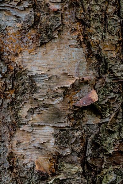 TREE BARK  52