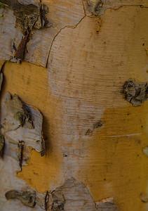 TREE BARK  19