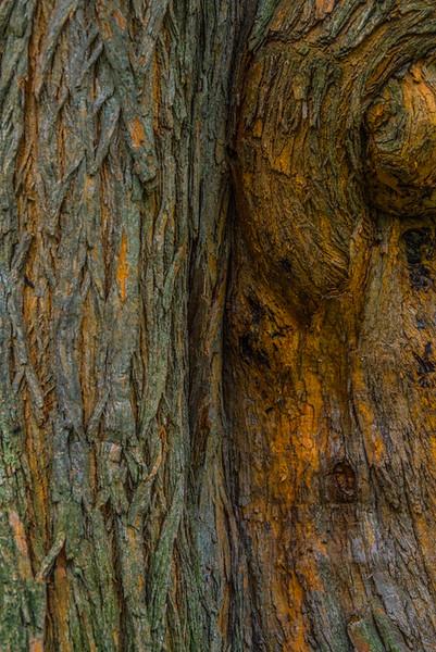 TREE BARK  34