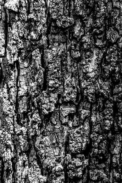 TREE BARK  46