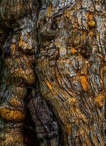 TREE BARK  9