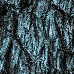 TREE BARK  14