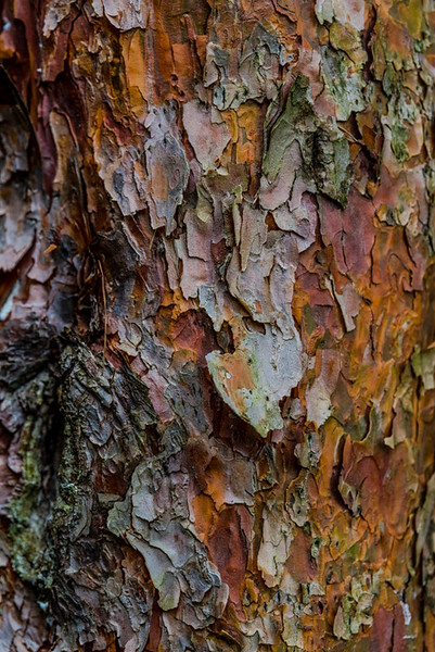 TREE BARK  5