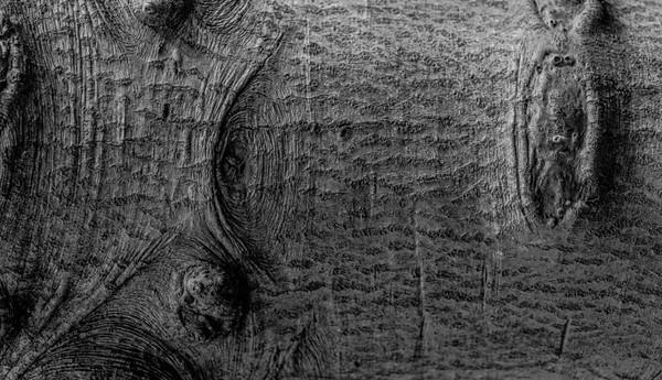 TREE BARK  21