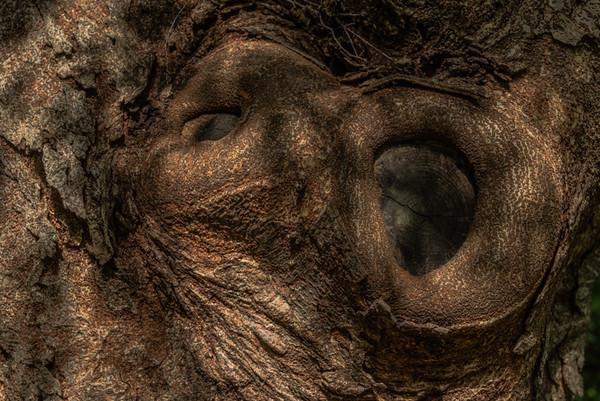 TREE BARK  7