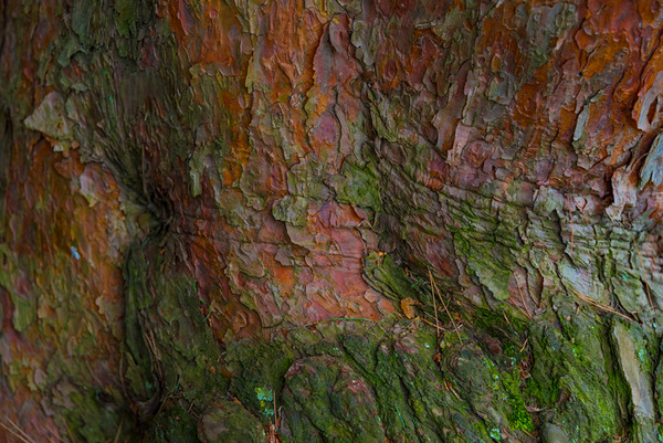 TREE BARK  47