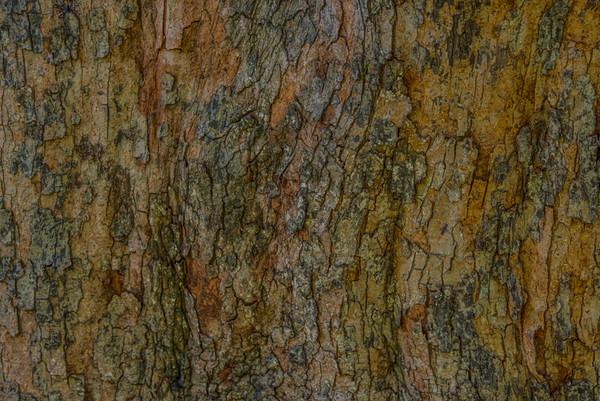TREE BARK  31