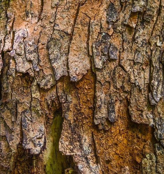 TREE BARK  28