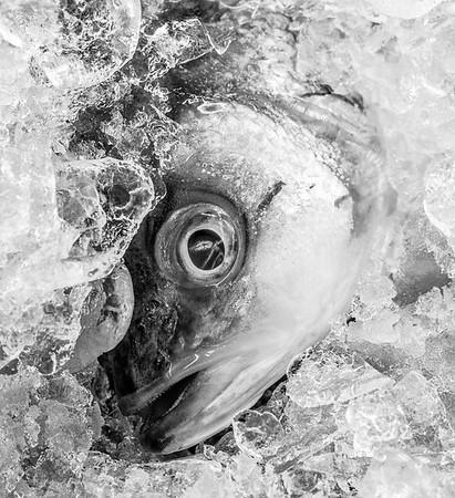 Sea Food Market 16