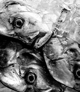 Sea Food Market 5