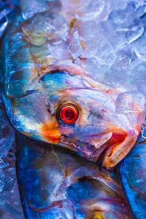 Sea Food Market 4