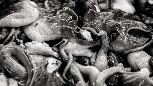 Sea Food Market 13