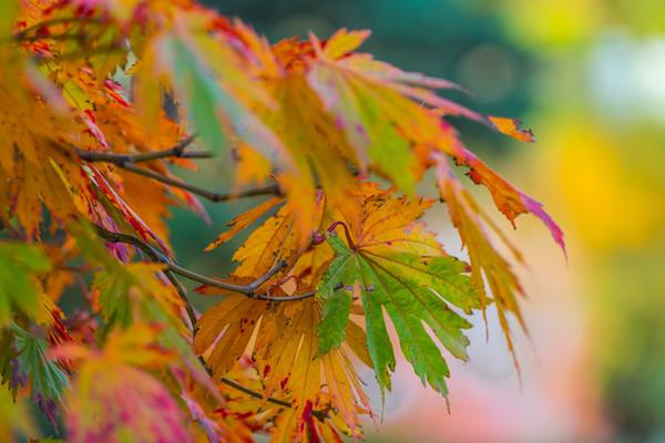 Autumn Garden  15