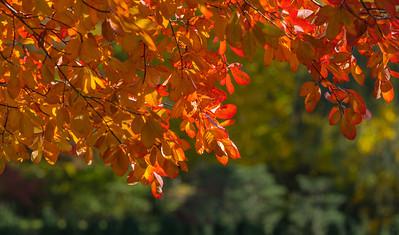 Autumn Garden  20