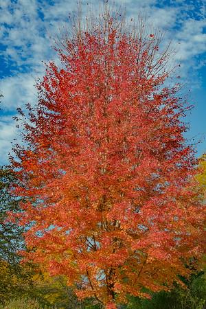 Autumn Garden  4