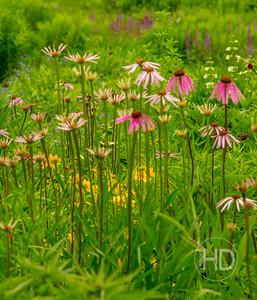 FLOWER FIELD 11