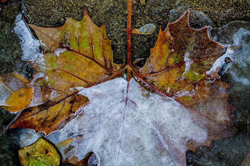 ICE  LEAF ROCK-12.jpg