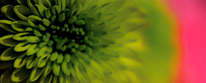 Leaf Flower Sky