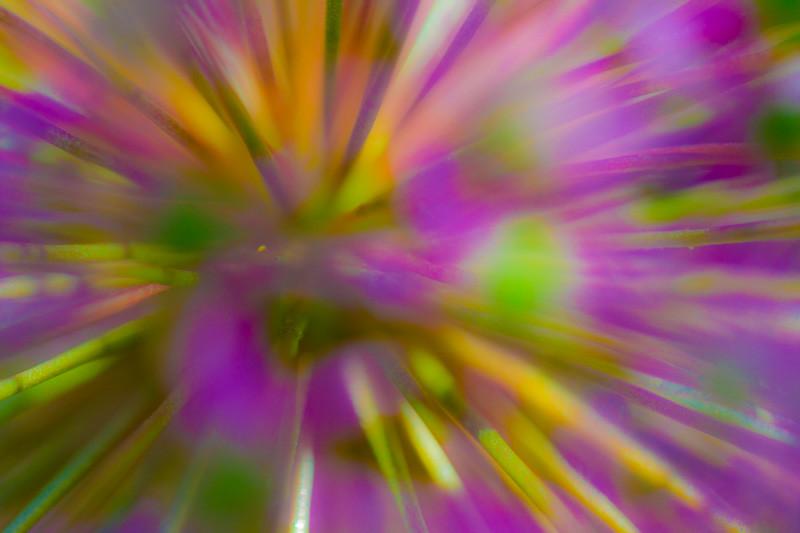 Flower Explosion # 1