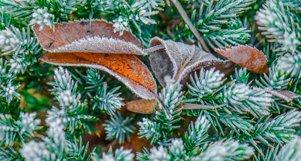 December Frost 14
