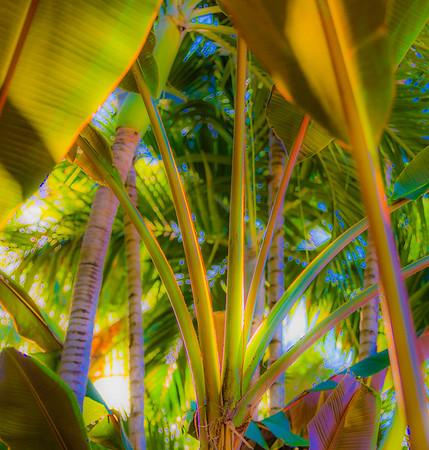 Palm%20Beach%206