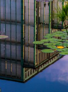 Lily  Pond 25
