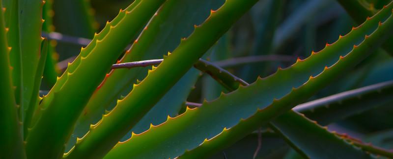 LOTUSLAND Santa Barbara