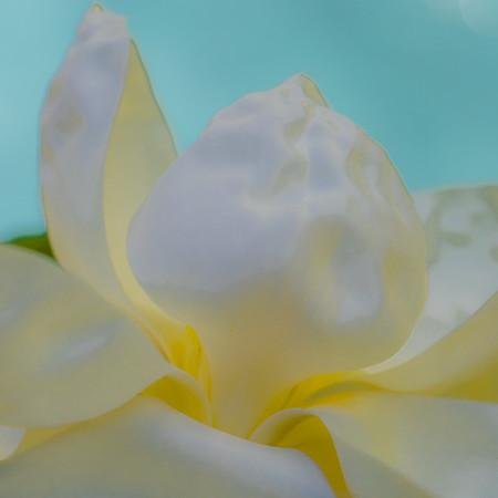 Magnolia Couture  4