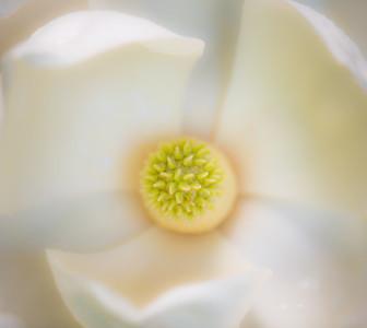 Magnolia Couture  21