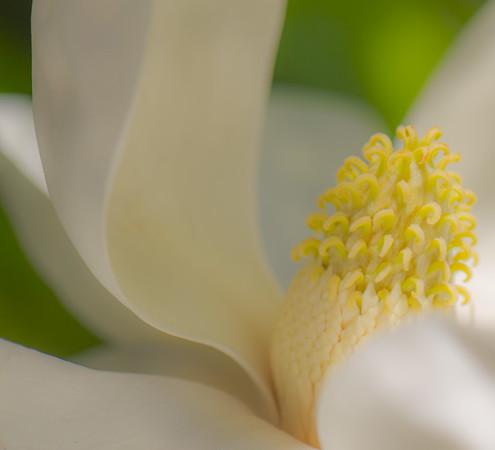 Magnolia Couture  8