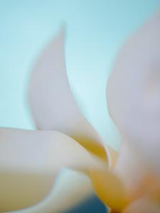 Magnolia Couture  19