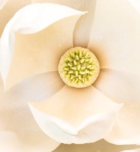 Magnolia Couture  1