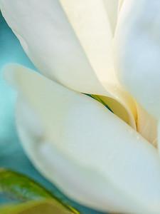 Magnolia Couture  20