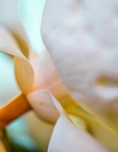 Magnolia Couture  5