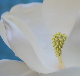 Magnolia Couture  6