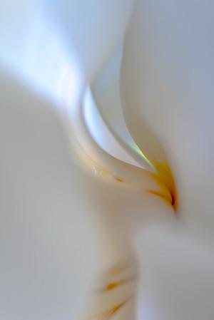 Magnolia Couture  14