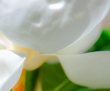 Magnolia 61