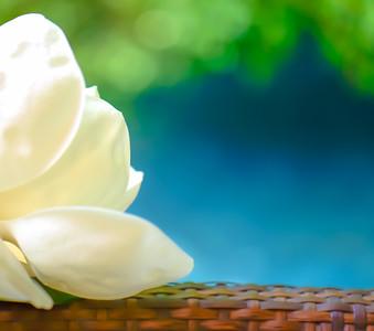 Magnolia 59