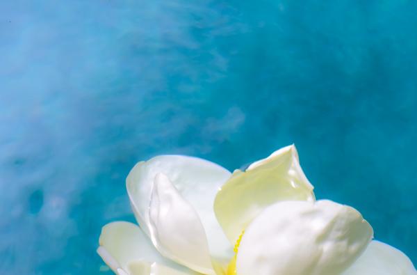 Magnolia 86