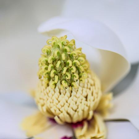 Magnolia 22