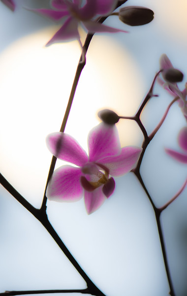ORCHID 9