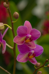 ORCHID 2018  20
